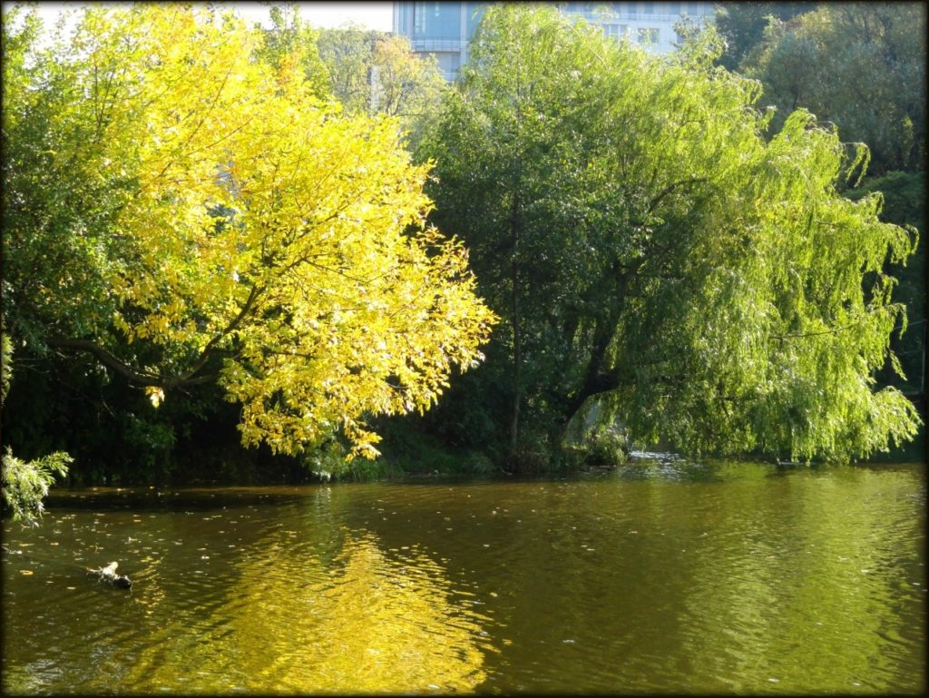 park-yuzhnyj